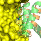 Computational Design of Anti-flu Proteins