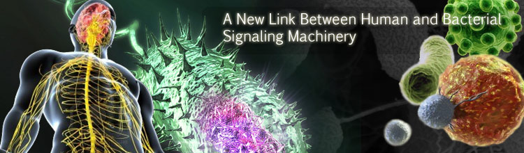 A New Link between Human and Bacterial Signaling Machineries