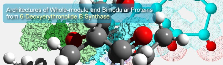 Architectures of Whole-module and Bimodular Proteins from 6-Deoxyerythronolide B Synthase