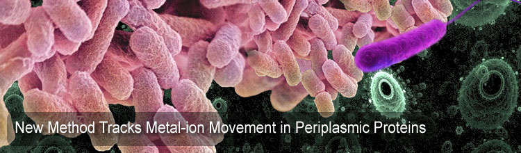 New Method Tracks Metal-ion Movement in Periplasmic Proteins