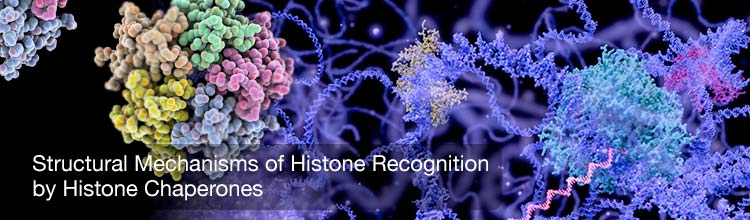 Structural Mechanisms of Histone Recognition by Histone Chaperones