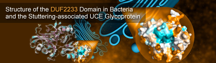 Structure of the DUF2233 Domain in Bacteria and the Stuttering-associated UCE Glycoprotein