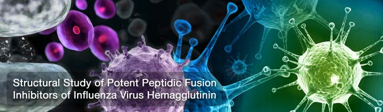 Structural Study of Potent Peptidic Fusion Inhibitors of Influenza Virus Hemagglutinin