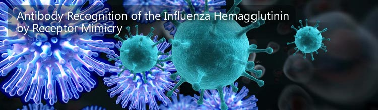 Antibody Recognition of the Influenza Hemagglutinin by Receptor Mimicry