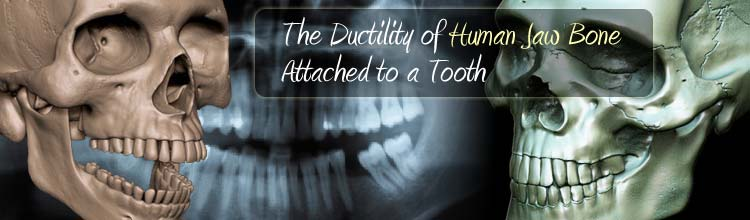 The Ductility of Human Jaw Bone Attached to a Tooth