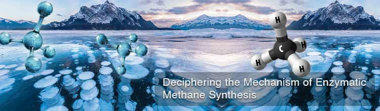Deciphering the Mechanism of Enzymatic Methane Synthesis