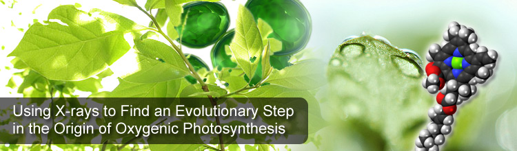 Using X-rays to Find an Evolutionary Step in the Origin of Oxygenic Photosynthesis