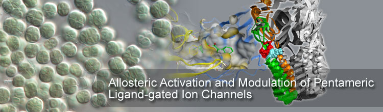 Allosteric Activation and Modulation of Pentameric Ligand-gated Ion Channels