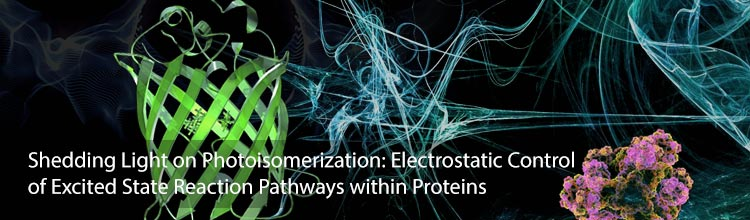 Shedding Light on Photoisomerization: Electrostatic Control of Excited State Reaction Pathways within Proteins