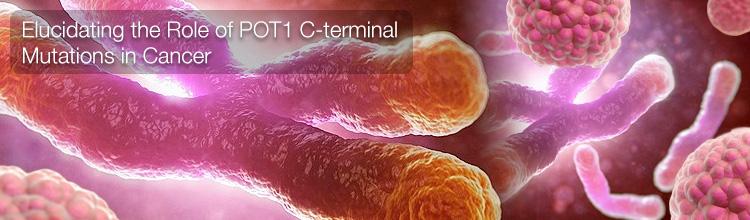 POT1 C-terminal Mutations in Cancer