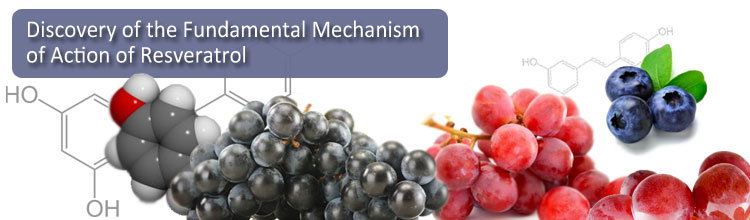 Discovery of the Fundamental Mechanism of Action of Resveratrol