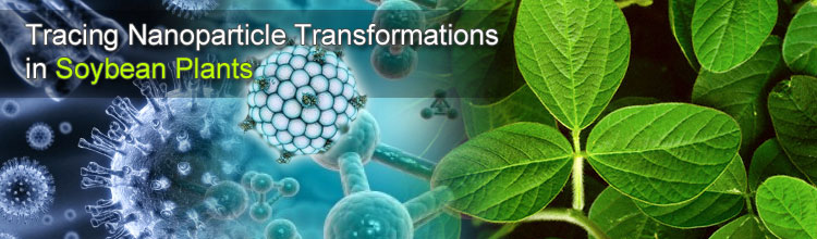Tracing Nanoparticle Transformations in Soybean Plants