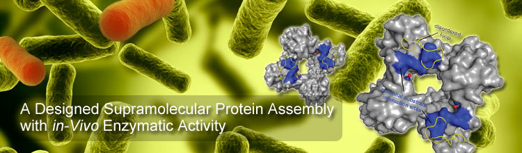 A Designed Supramolecular Protein Assembly