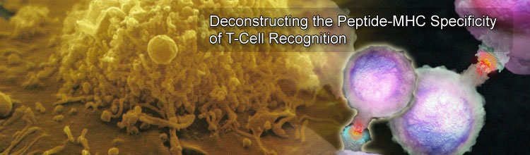 Deconstructing the Peptide-MHC Specificity of T Cell Recognition