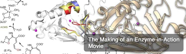 The Making of an Enzyme-in-Action Movie