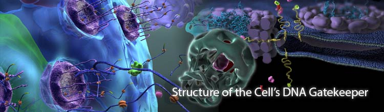 Structure of the Cell's DNA Gatekeeper