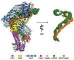 CRISPR figure