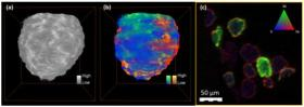 Full-field hard X-ray TXM mosaic tomography of a 50 µm FCC particle