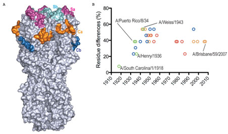 an analysis of the composition of a virus Full text abstract: the solution conformation of two variants of cucumber mosaic virus satellite rna (cmv satrna) was analyzed using several enzymatic and chemical.